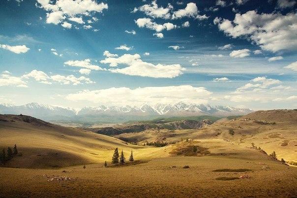 Алтай өлкесі (Ресей)