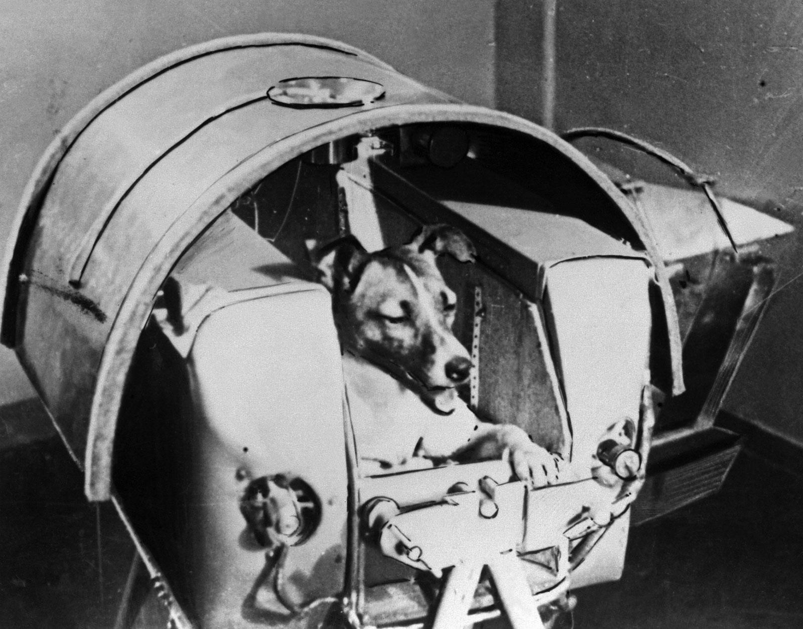 фото лайки собаки на спутнике 2